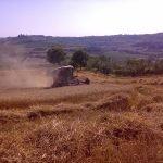 Mietitura sulla collina di Fezzana